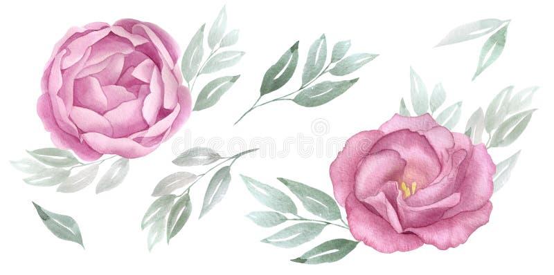 Roze geplaatste waterverfbloemen Botanische bloemenillustratie de roze bloesempioen, nam, groene bladeren toe De kaart van het hu vector illustratie
