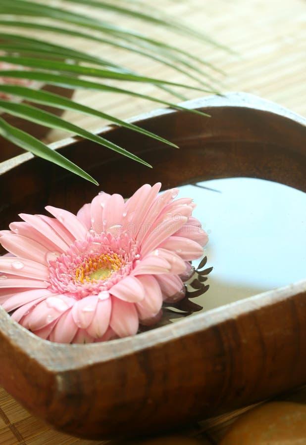 Roze gerber die in houten kom drijft. stock foto