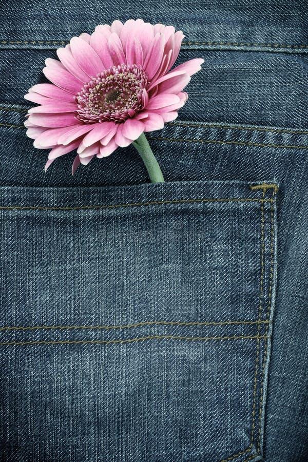 Roze gerber in jeanszak stock fotografie