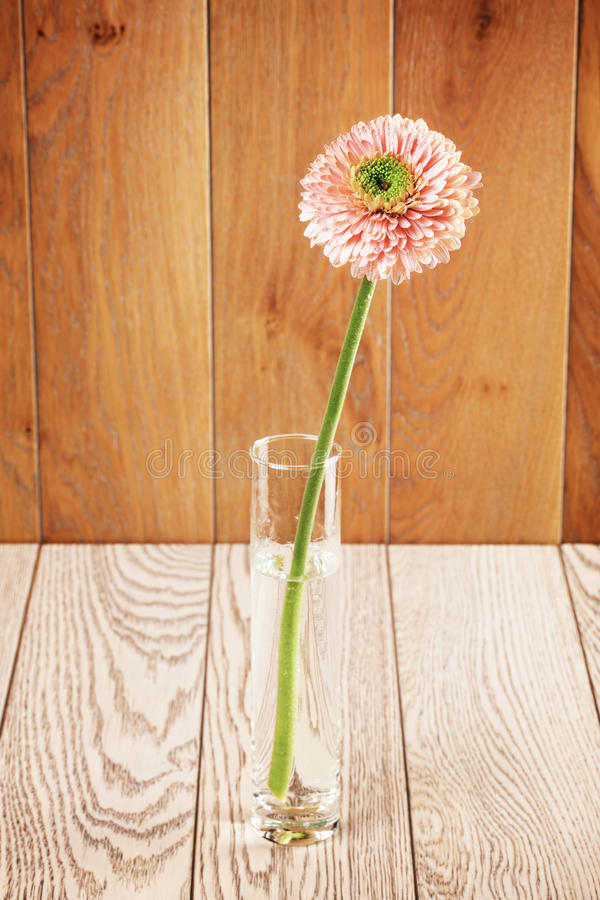 Roze Gerbera Daisy In Vase stock afbeeldingen