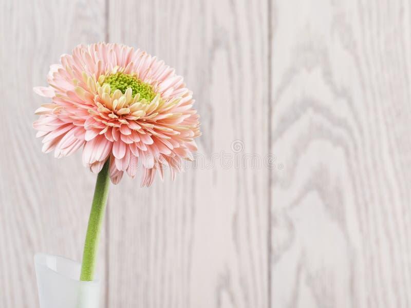 Roze Gerbera Daisy In Vase royalty-vrije stock foto's