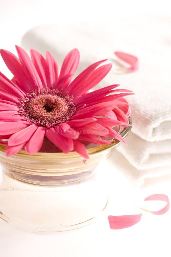 Roze gerbera en witte handdoeken royalty-vrije stock foto