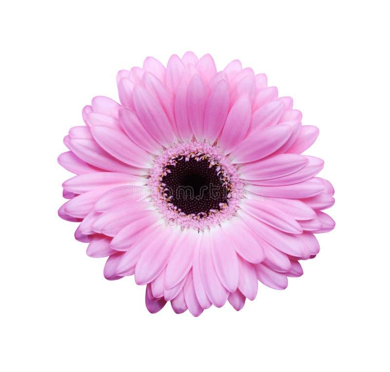 Roze gerbera met weg royalty-vrije stock afbeeldingen