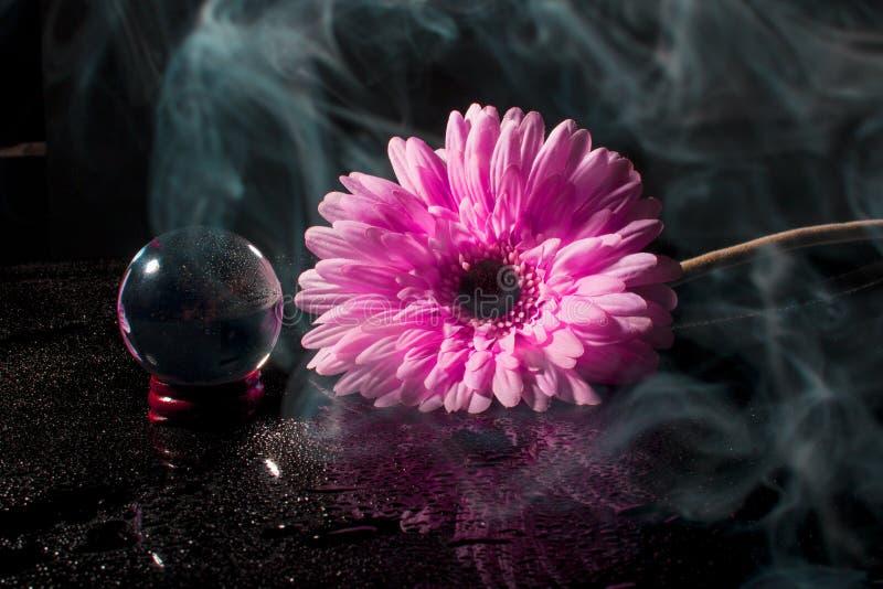 Roze gerbera op een zwarte achtergrond met waterdalingen stock afbeeldingen