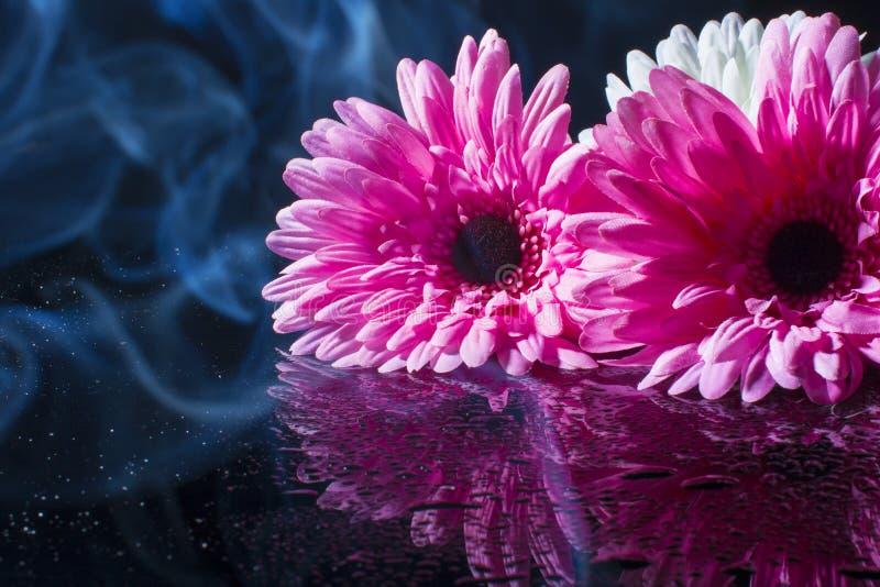 Roze gerbera op een zwarte achtergrond met waterdalingen royalty-vrije stock foto's