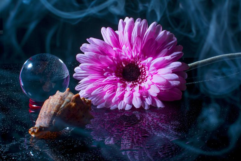 Roze gerbera op een zwarte achtergrond met waterdalingen stock fotografie