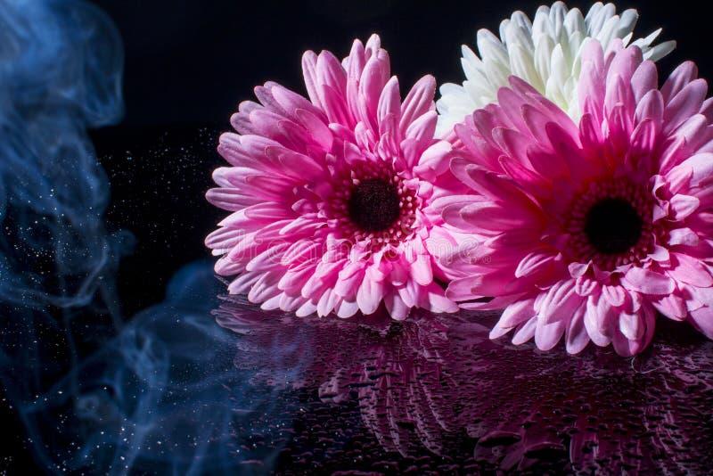 Roze gerbera op een zwarte achtergrond met waterdalingen stock foto's