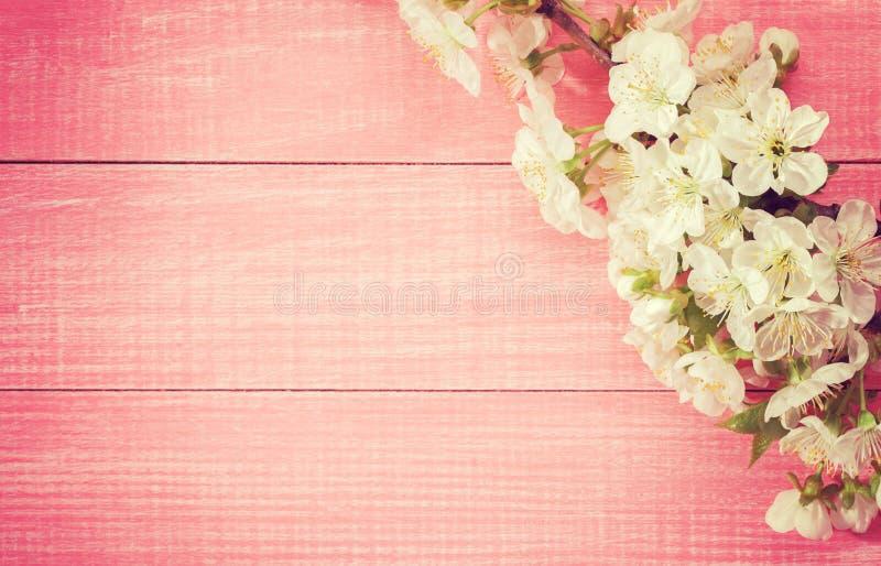 Roze houten achtergrond met bloeiende zoete kersentakken Gestemd beeld stock afbeelding