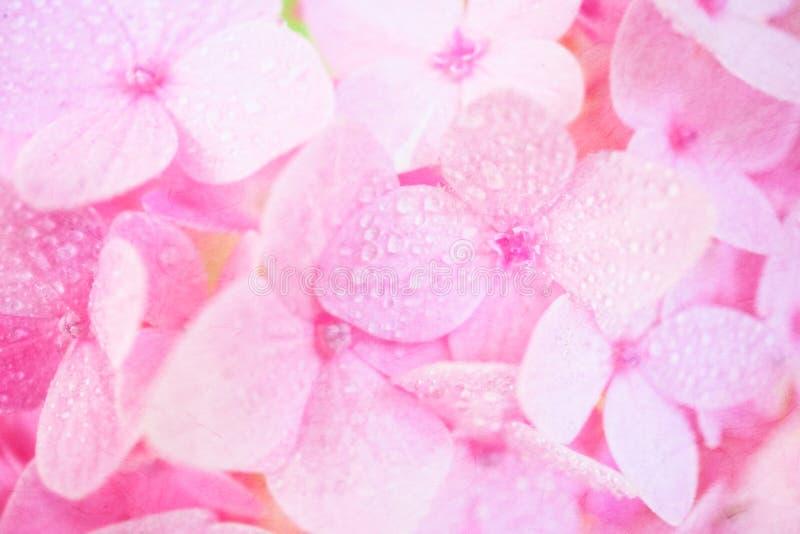 Roze hydrangea hortensia's in onduidelijk beeldstijl op moerbeiboomdocument textuur royalty-vrije stock foto's