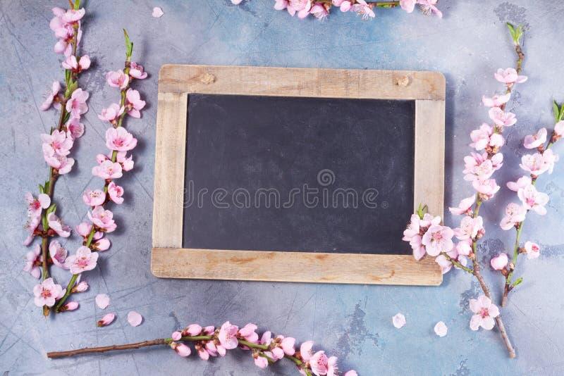 Roze kersenbloesem royalty-vrije stock fotografie