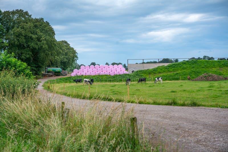Roze kuilvoederbalen op een melkveehouderij royalty-vrije stock afbeelding