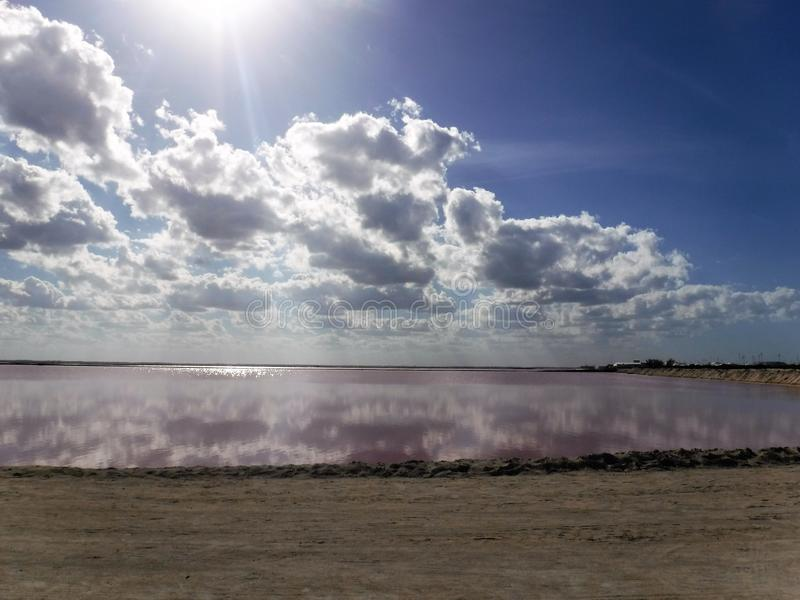 Roze lagune stock fotografie