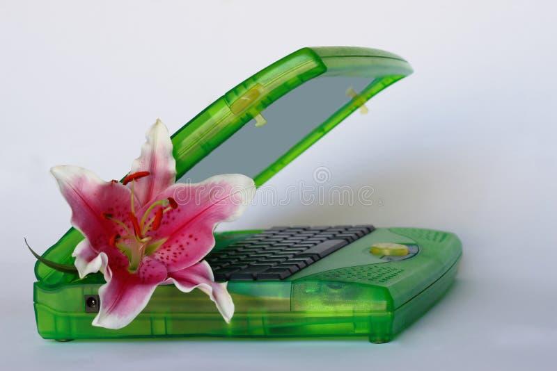 Roze lelie in groene laptop stock fotografie