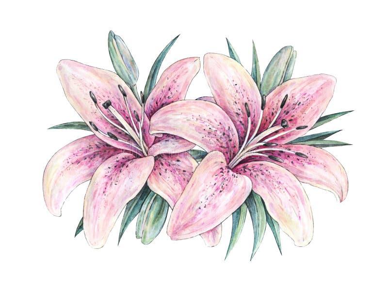 Roze leliebloemen op witte achtergrond Waterverfhandwork illustratie Tekening van bloeiende lelie met groene bladeren vector illustratie