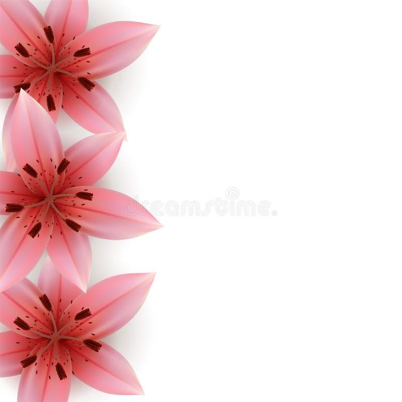 Roze Lelies stock illustratie