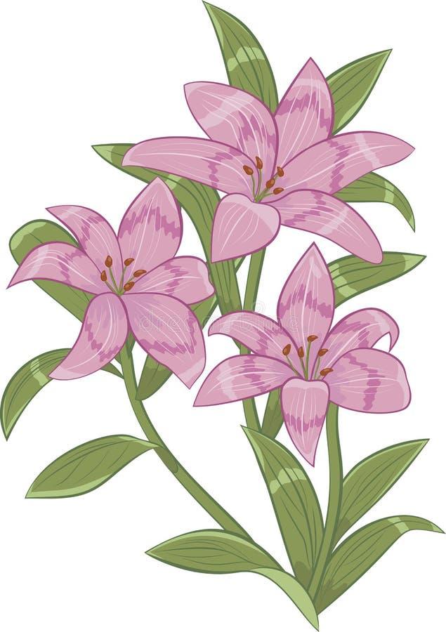 Roze lelies royalty-vrije illustratie