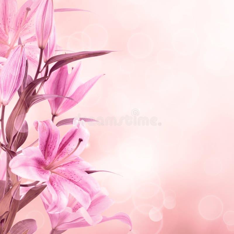 Roze leliesachtergrond stock foto's