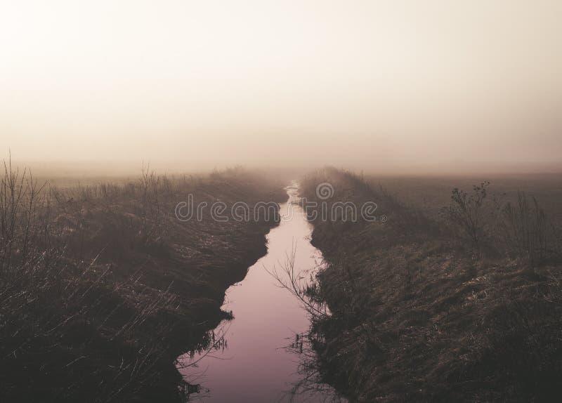 Roze licht in de ochtend in de wildernis stock foto