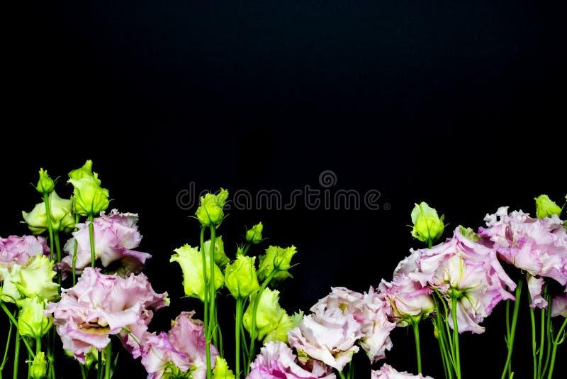 Roze Lisianthus op een zwarte achtergrond, beschikbare ruimte voor uw tekst stock foto's