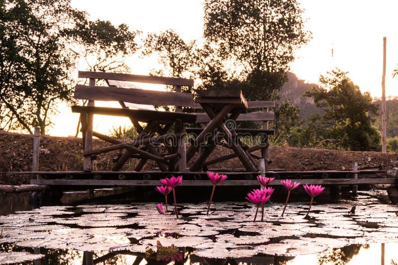 Roze lotusbloem in een vijver royalty-vrije stock fotografie