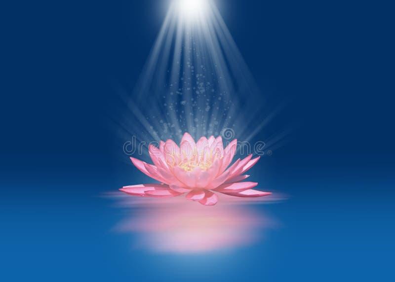 Roze lotusbloem met lichtstralen stock afbeeldingen