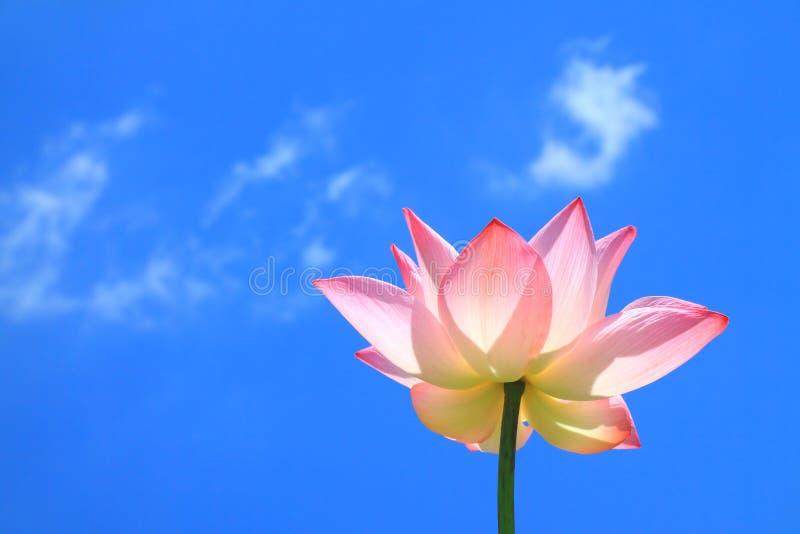Roze lotusbloem op blauwe hemel en wolk royalty-vrije stock foto's