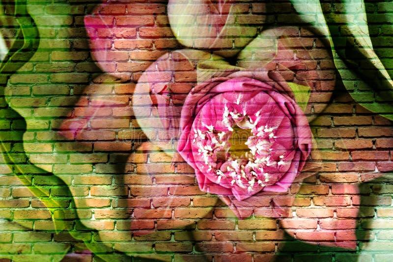 Roze lotusbloembloemen op bakstenen muur stock afbeeldingen
