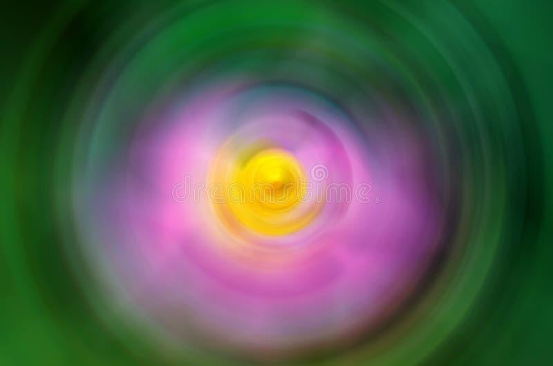 Roze lotusbloembloesems of waterleliebloemen royalty-vrije stock afbeeldingen