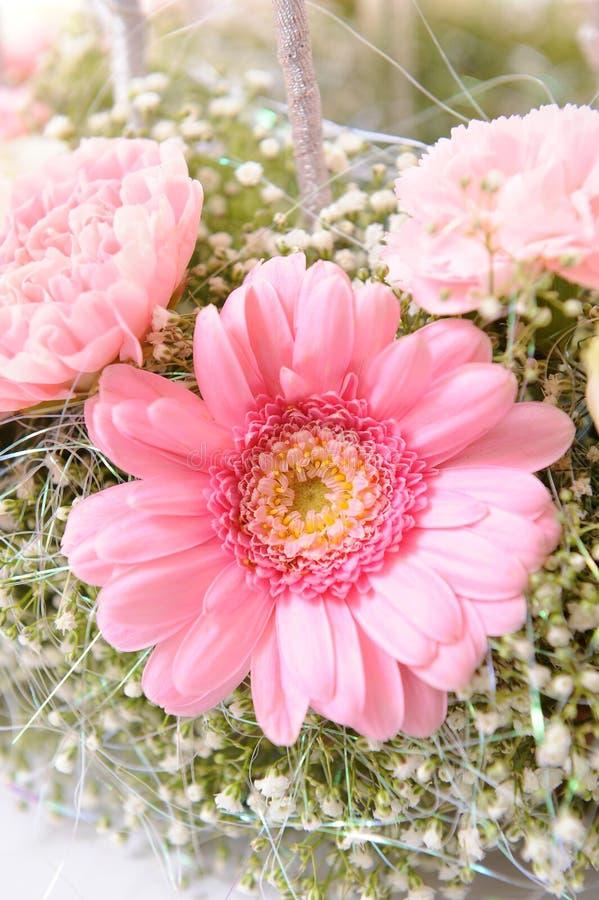 Roze madeliefjemacro royalty-vrije stock afbeelding
