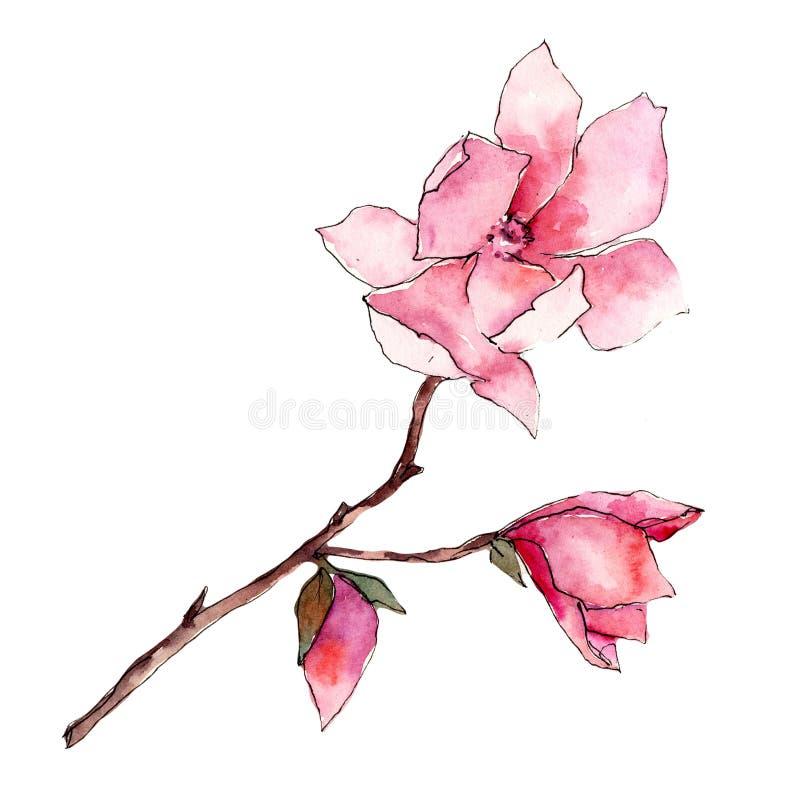 Roze magnolia Bloemen botanische bloem Wild geïsoleerd de lenteblad wildflower stock illustratie