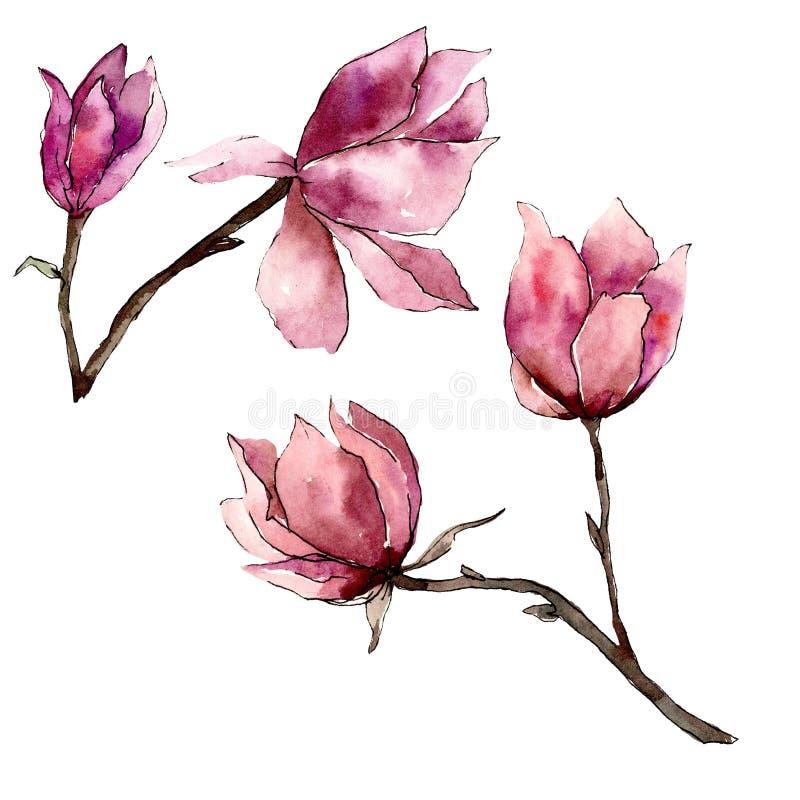 Roze magnolia bloemen botanische bloemen Waterverf achtergrondillustratiereeks Het ge?soleerde element van de magnoliaillustratie stock illustratie