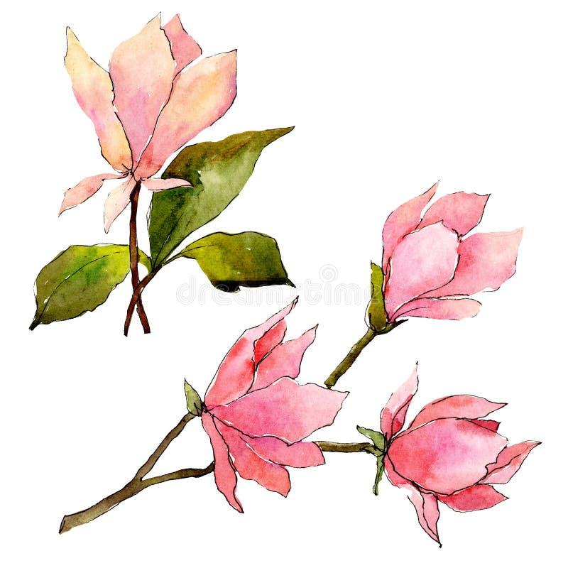 Roze magnolia bloemen botanische bloemen Waterverf achtergrondillustratiereeks Het ge?soleerde element van de magnoliaillustratie vector illustratie