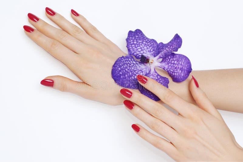 Roze manicure en purpere orchidee stock fotografie