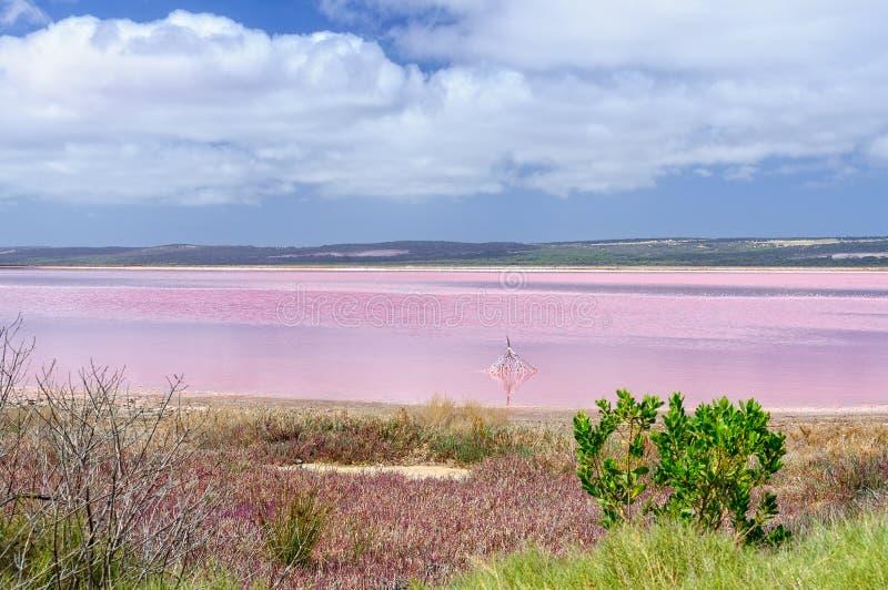 Roze Meer - Gregory stock afbeelding