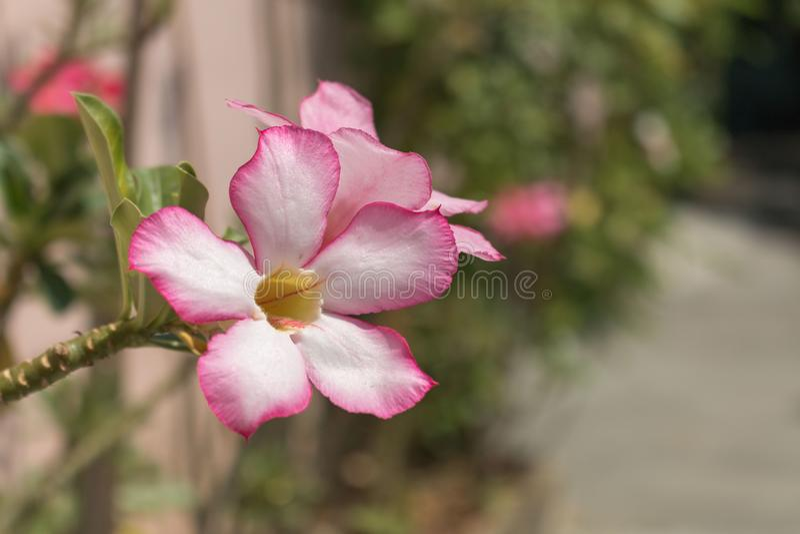 Roze mooie bloem stock foto