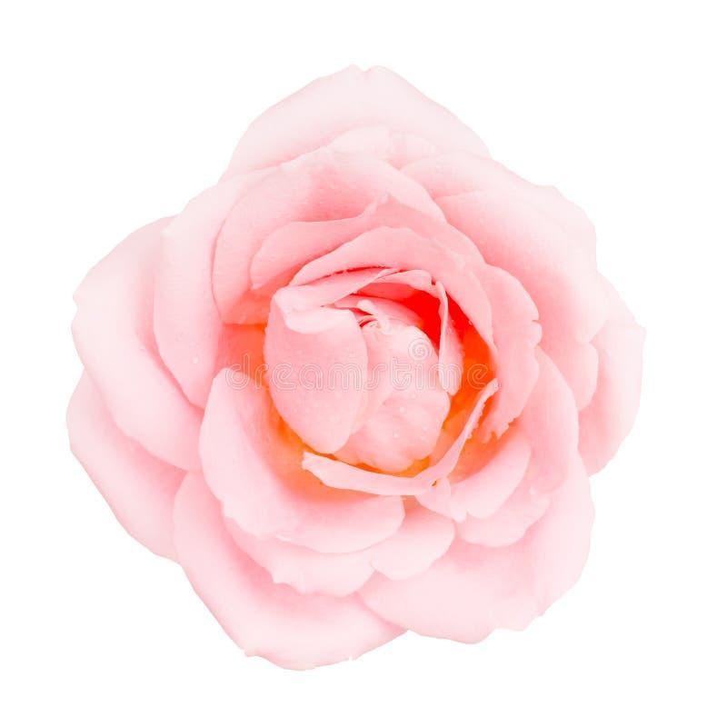 Roze nam bloem toe stock foto's