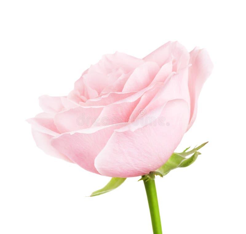 Roze nam bloem toe royalty-vrije stock fotografie