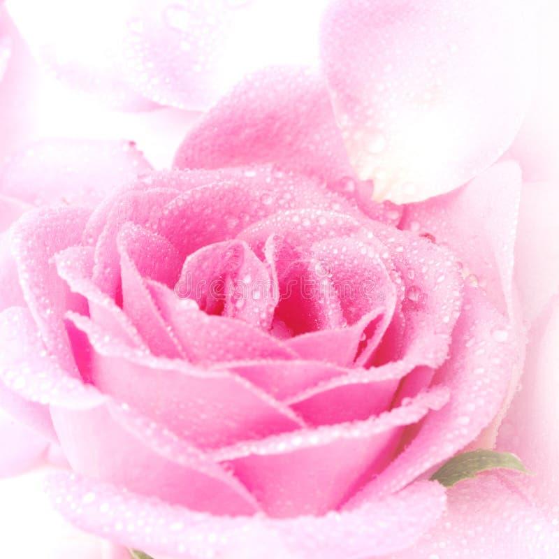 Roze nam Bloemblaadjes toe stock afbeelding