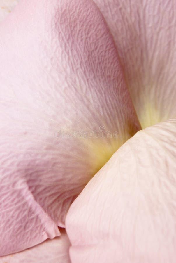 Roze nam Bloemblaadjes toe royalty-vrije stock afbeelding