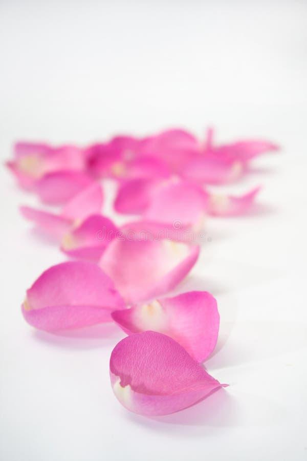 Roze nam bloemblaadjes toe als weg royalty-vrije stock afbeeldingen