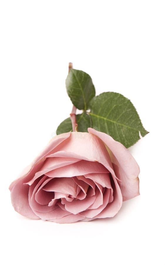 Roze nam Geïsoleerde toe royalty-vrije stock afbeelding