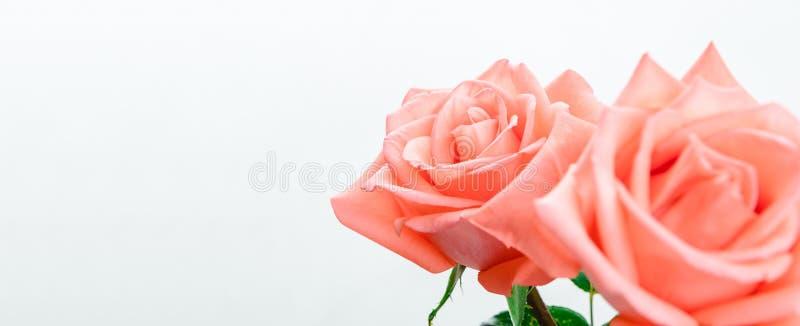 Roze nam met exemplaarruimte toe - uitgezochte brandpunts stock fotografie