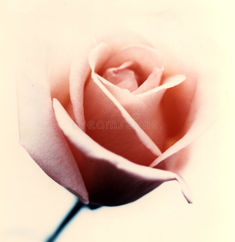 Roze nam op beige achtergrond toe royalty-vrije stock foto's