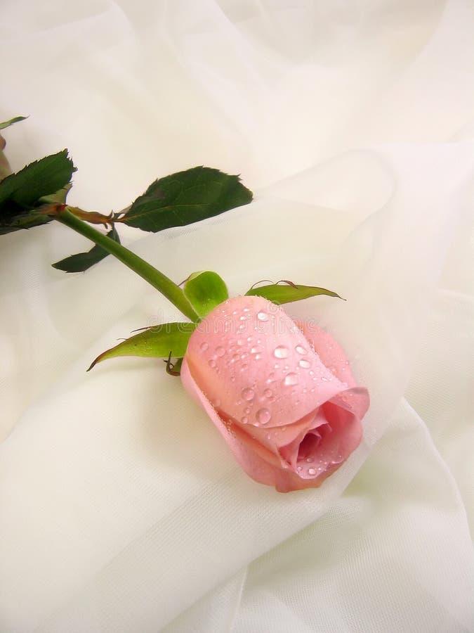 Roze nam op sluier toe royalty-vrije stock afbeelding