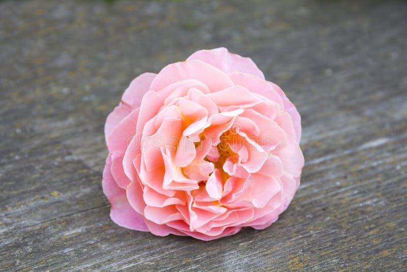 Roze nam rust op een houten achtergrond toe stock fotografie