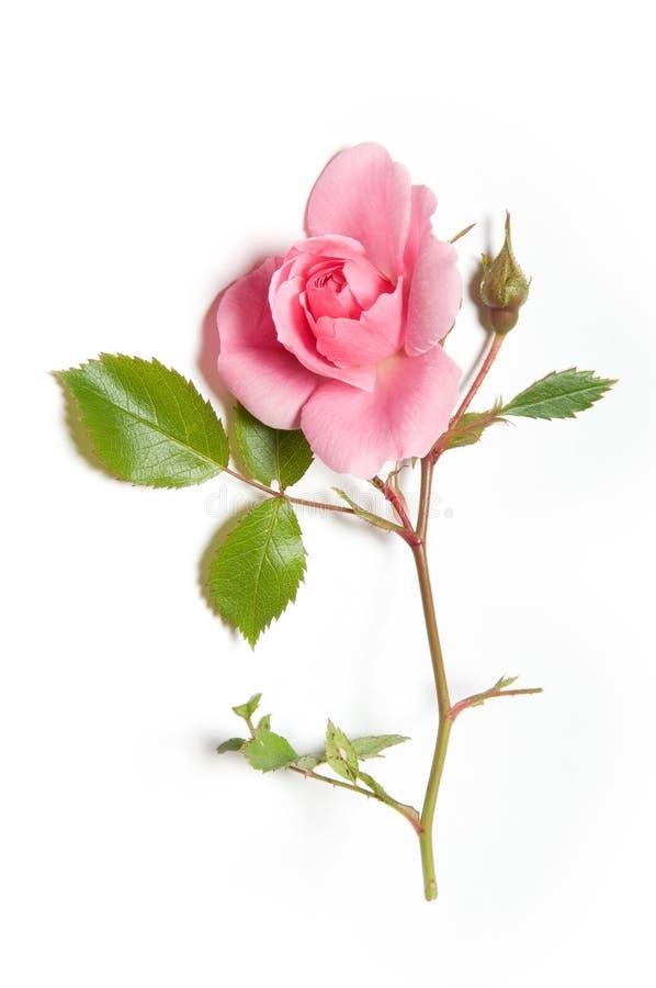 Roze nam toe stock afbeelding