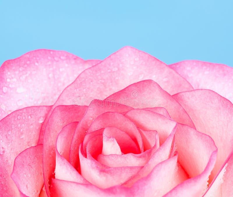 Roze nam toe stock fotografie