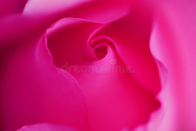 Roze nam toe Knop Roze zijde abstracte achtergrond Gevoelige bloemblaadjes Romantische stemming abstracte achtergrond stock fotografie