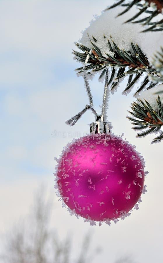 Roze Nieuwjaarbal op levende spar met vorst en sneeuw stock foto