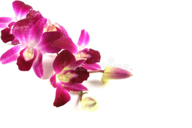 Roze orchideeën. royalty-vrije stock afbeeldingen
